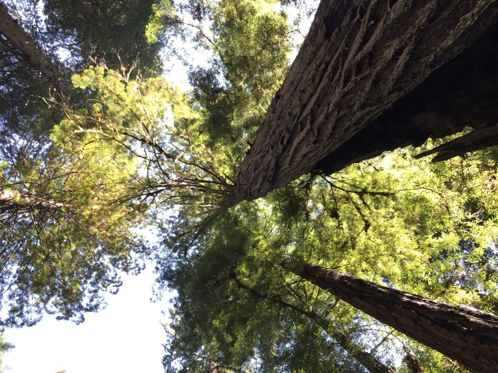 Take a stress break with this guided imagery meditation -- woods