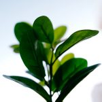 Green house plant. Green is a great color for self-care.